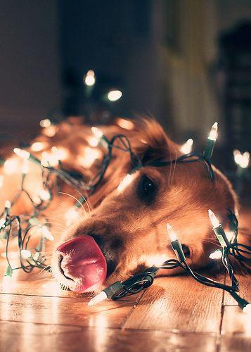 dziewczynka całuje psa w święta