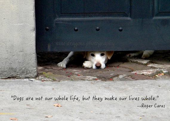 When A Dog Dies Quotes Quotesgram: Pet Death Quotes Inspirational. QuotesGram