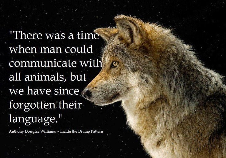 Quotes About Native American Wolf. QuotesGram