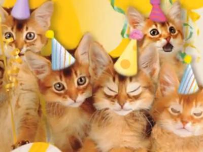 Cute Cat Birthday Quotes
