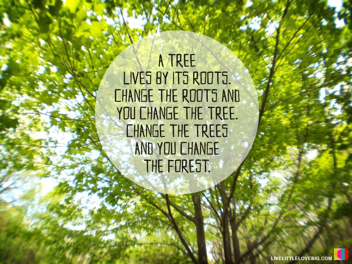 Quotes About Trees And Roots. QuotesGram