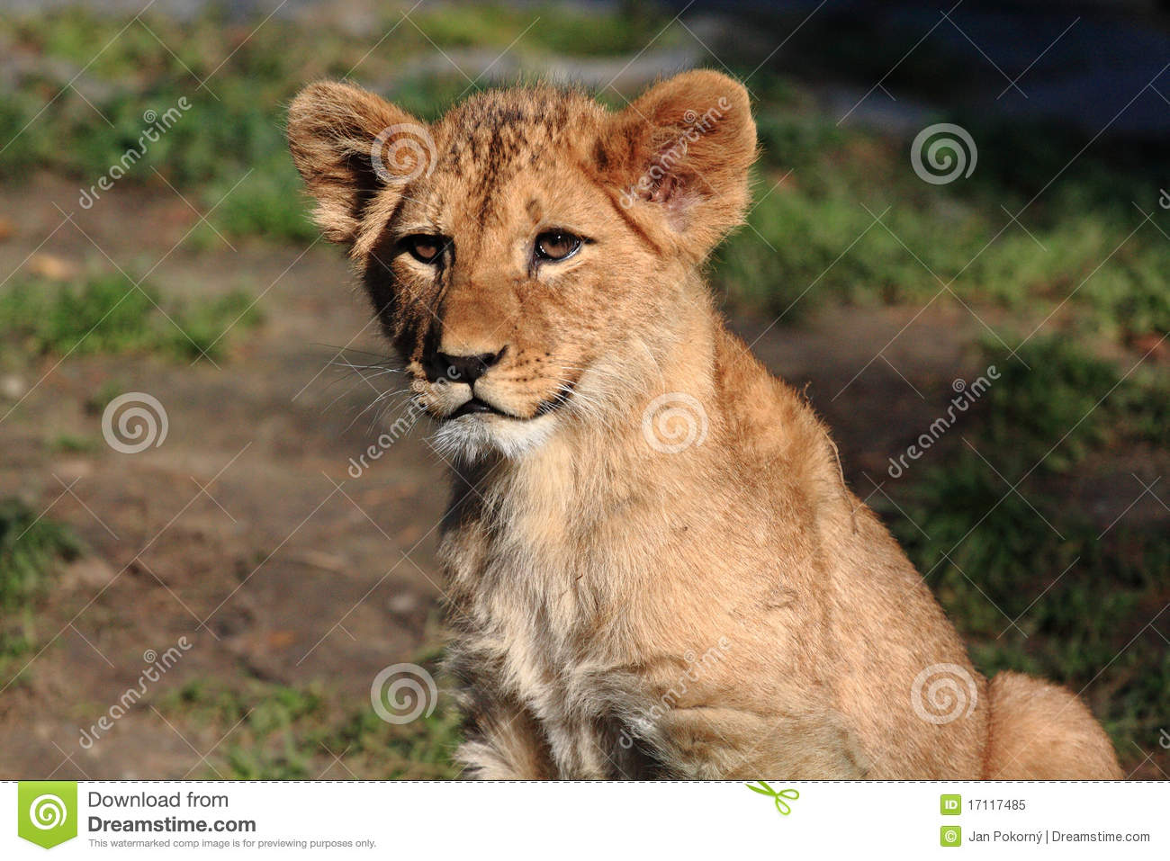 Lion Cub Quotes. QuotesGram Leopard Cubs With Mother