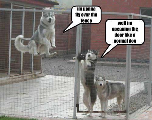 When A Dog Dies Quotes Quotesgram: Smart Dog Quotes. QuotesGram