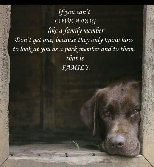 Dog Wisdom Quotes. QuotesGram