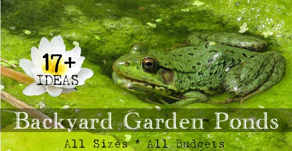 Backyard pond quotes quotesgram for Small frog pond ideas
