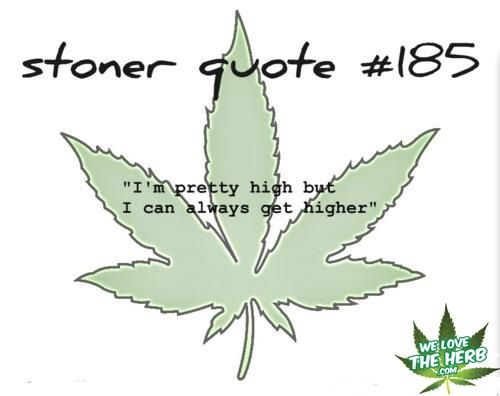 stoner valentines day quotes - Funny Stoner Quotes And Sayings QuotesGram