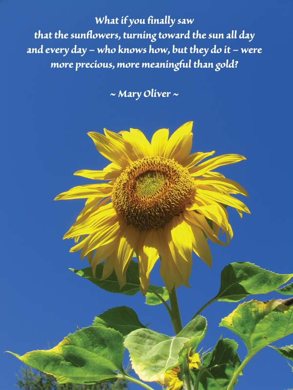 Sunflower Quotes Or Poems. QuotesGram