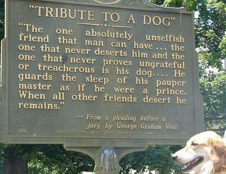 Mans Best Friend Dog Quotes. QuotesGram