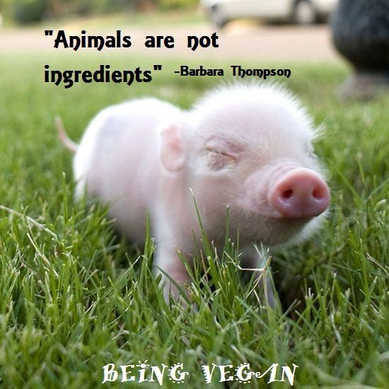 Being A Vegan Quotes. QuotesGram