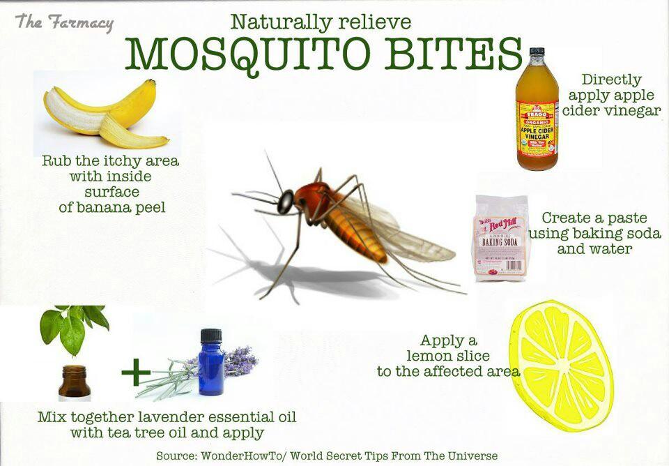 Mosquito Quotes. QuotesGram