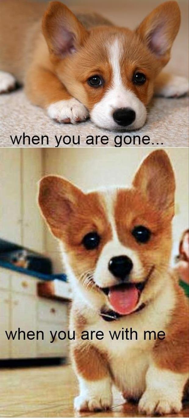 Cute Puppies Funny Quotes. QuotesGram
