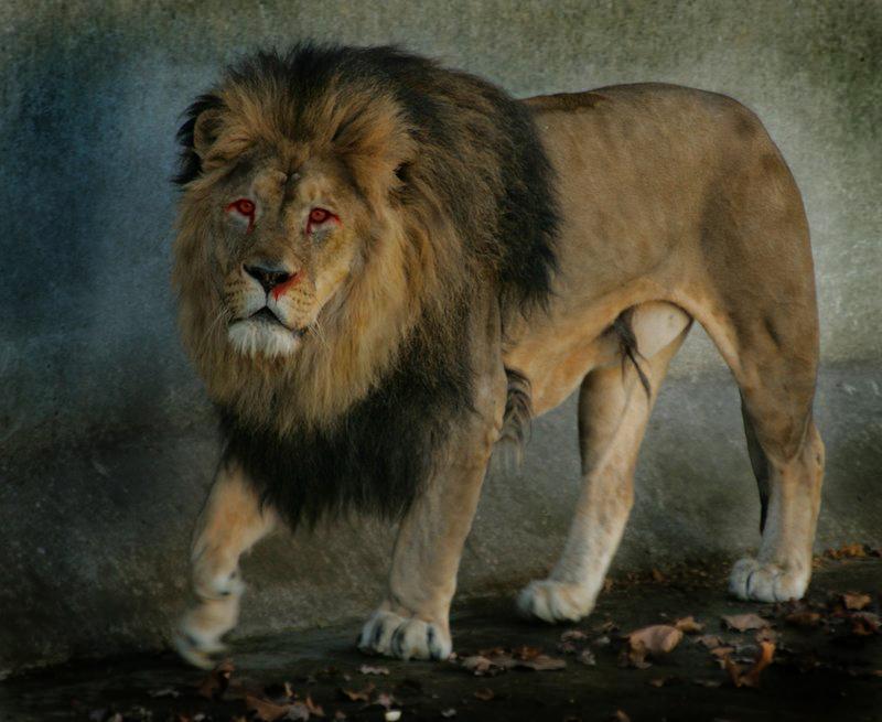 Львы, для того, чтобы помочь окружающим, вовсе не обязательно погружаться в их проблемы с головой.