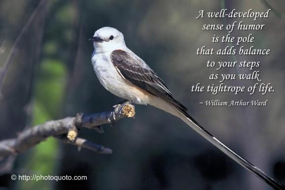 funny bird quotes quotesgram