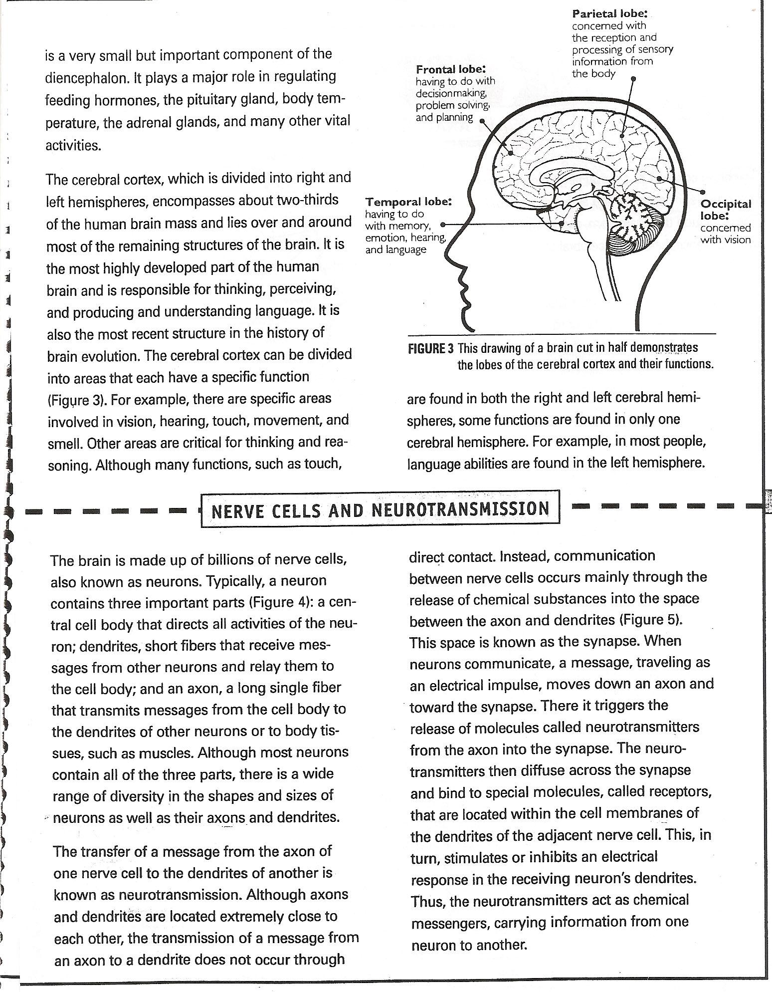 Integrating Quotes Worksheet. QuotesGram Inside Nervous System Worksheet High School