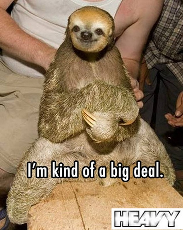 Sloth Animal Funny Quotes. QuotesGram