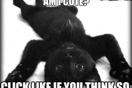 Funny Cat Quotes Black Quotesgram