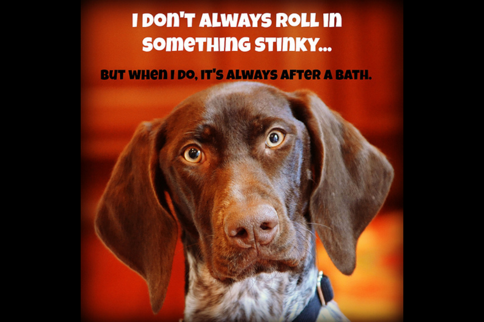 Summer Funny Quotes Dogs. QuotesGram