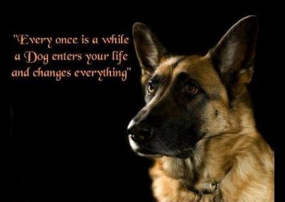 Home Protection Dog Quotes Quotesgram