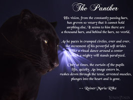 Black Panther Quotes Quotesgram