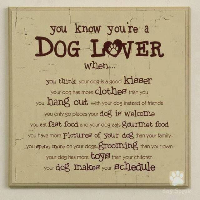 quotes i love my pets quotesgram
