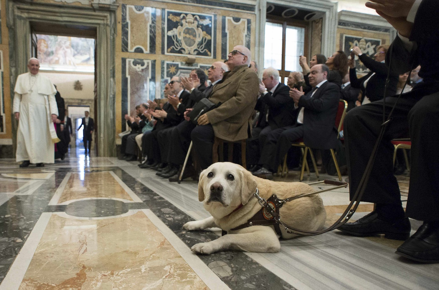 Quotes Pope Francis And Animals. QuotesGram