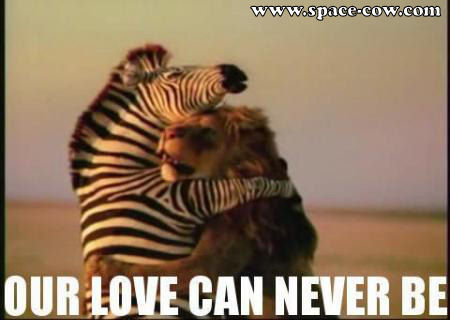 Cute animals with love quotes - photo#37