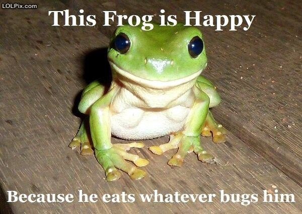 Cute frog quotes quotesgram - Funny frog pictures ...