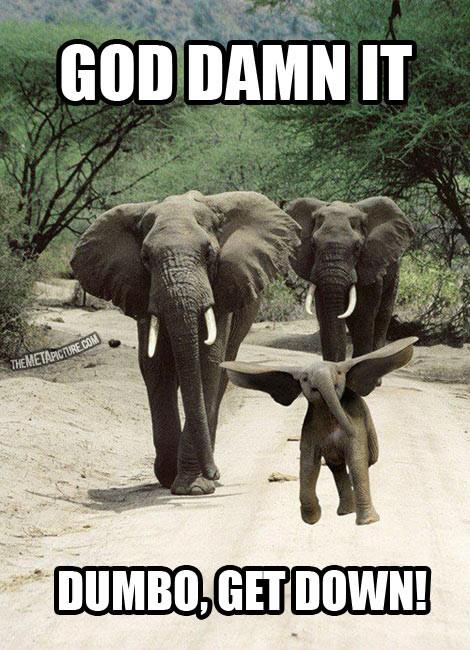 Funny Elephant Pictures With Quotes. QuotesGram