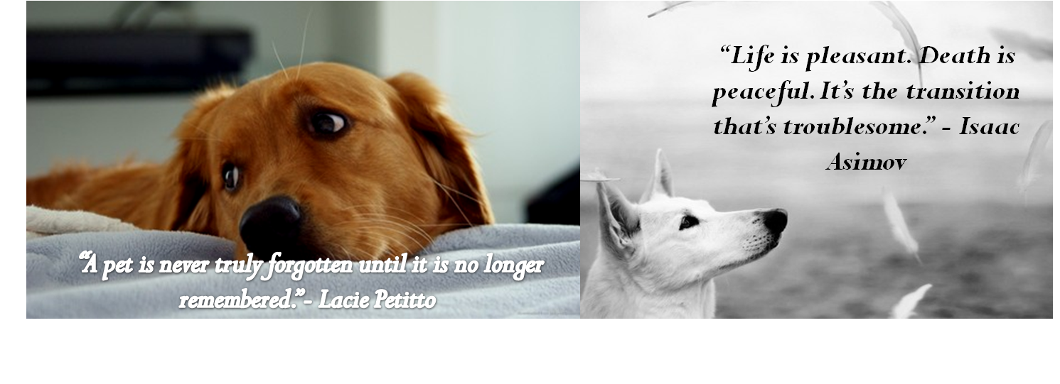 Beautiful Quotes About Losing A Pet. QuotesGram