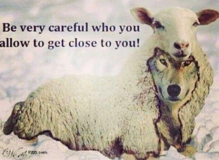 Never Trust A Wolf In Sheep S Clothing