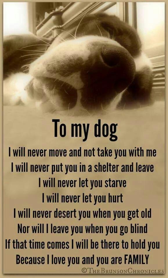 Citaten Frank Sinatra : I love my dog quotes sayings quotesgram