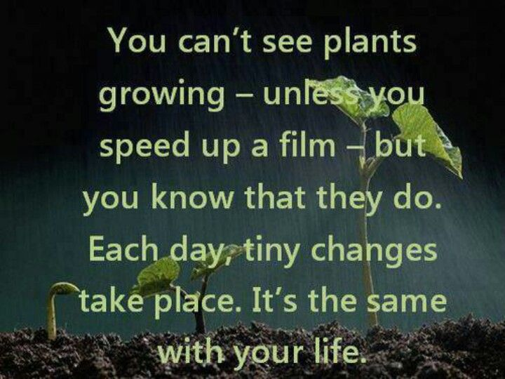 Quotes About Growing Plants. QuotesGram