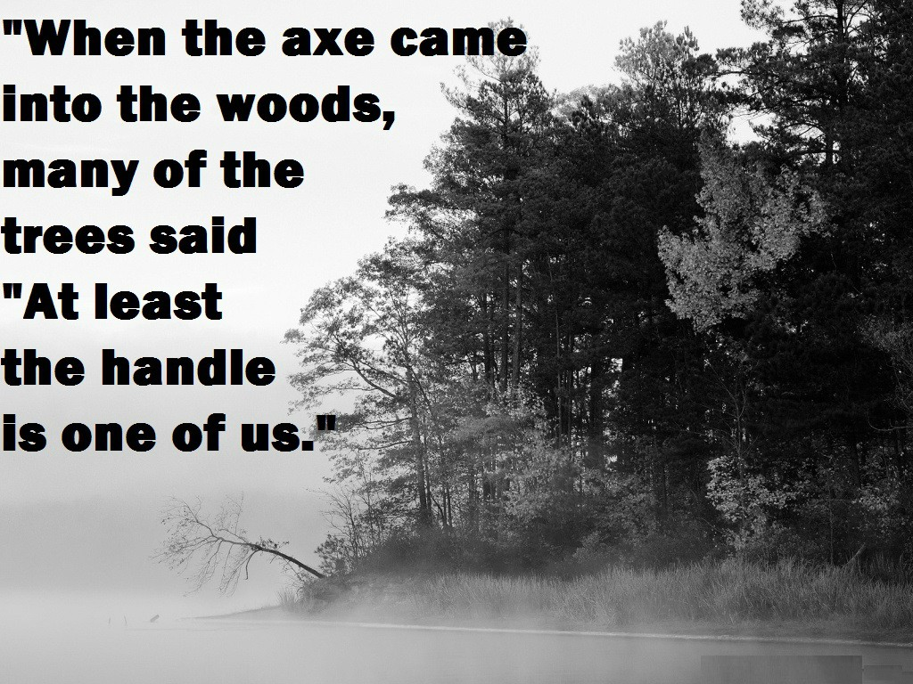 Quotes About The Forest. QuotesGram