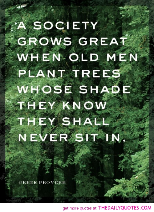 Quotes About Old Trees. QuotesGram