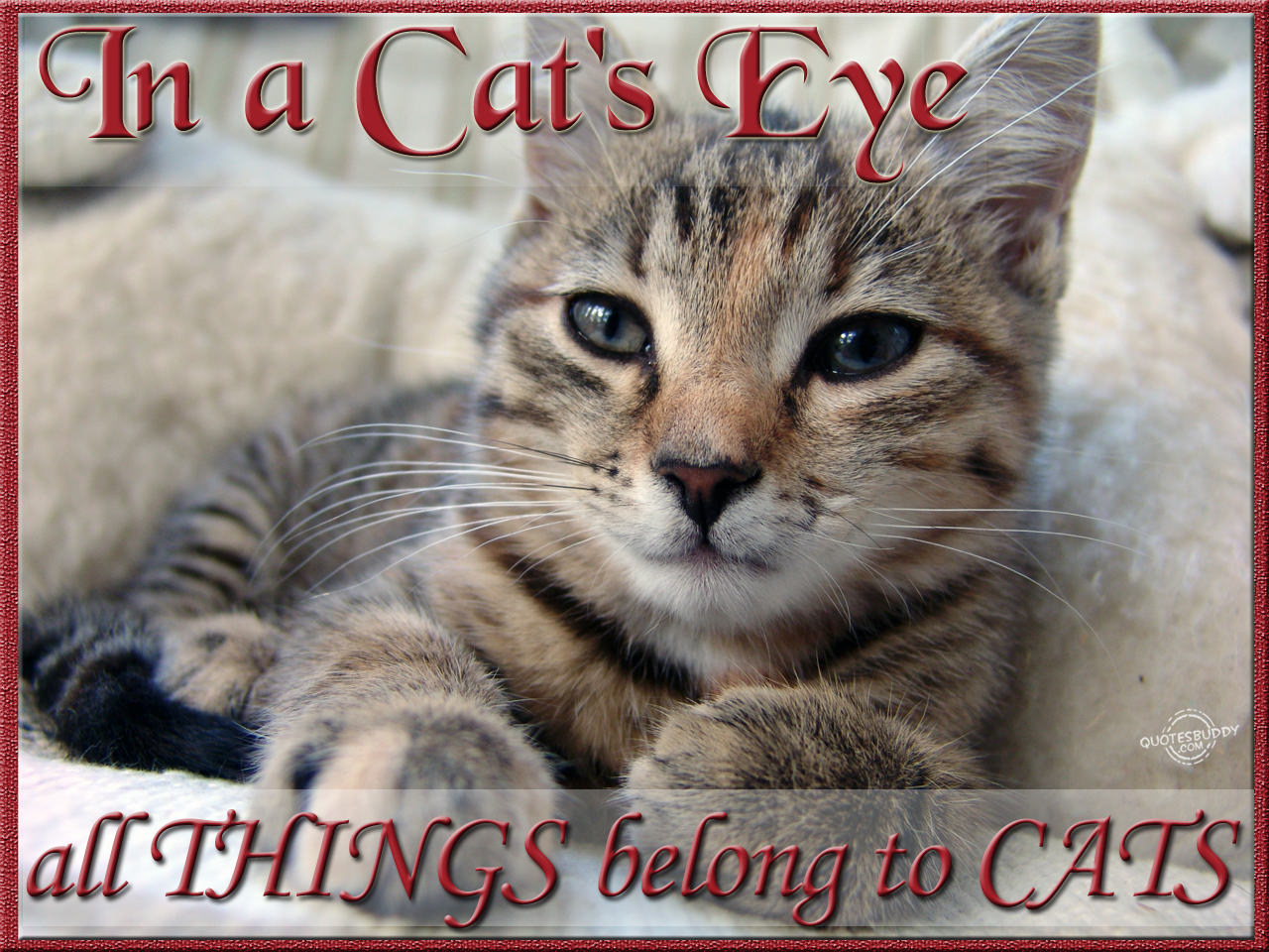 Cute and Funny Pictures and more: Cute Bad Day Kitten ... |Cute Kittens Quotes