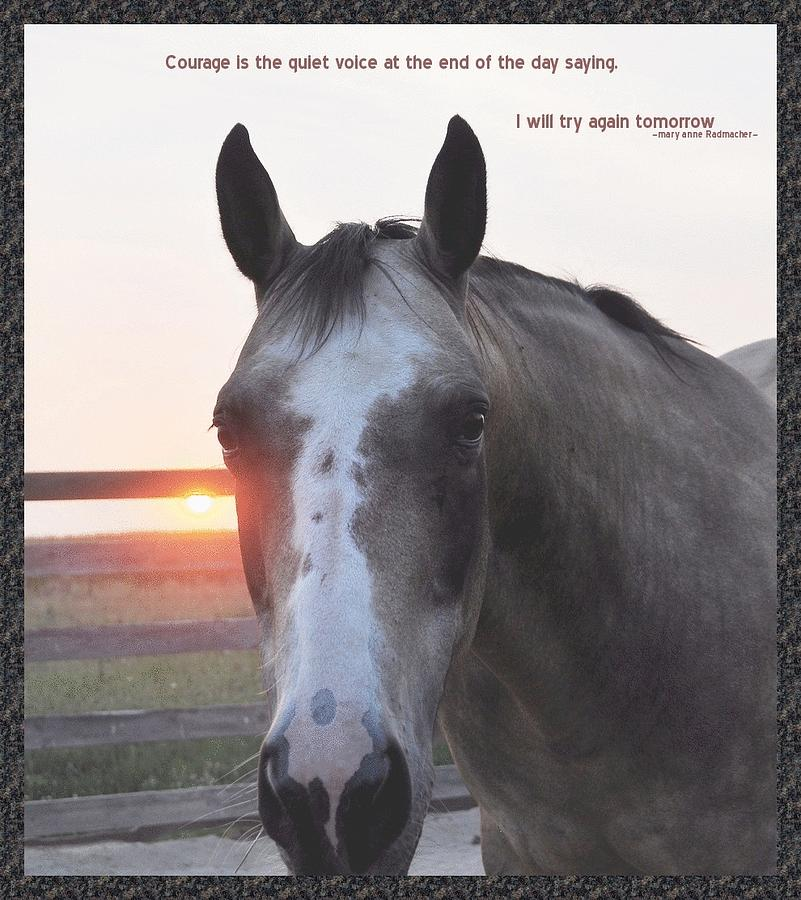 Horses Quotes And Saying At Sunset. QuotesGram