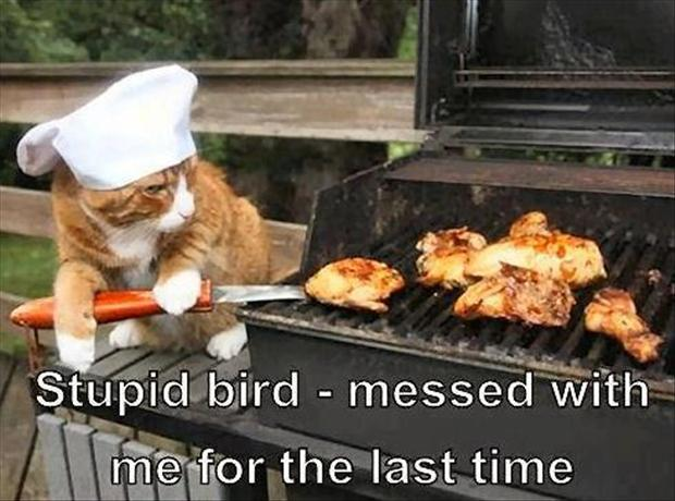 2048277948-3-cat-cooks-bird-on-bbq-funny-pictures.jpg