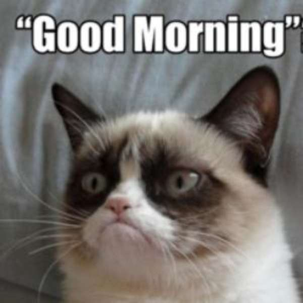 Angry Good Morning Meme : Grumpy morning quotes quotesgram