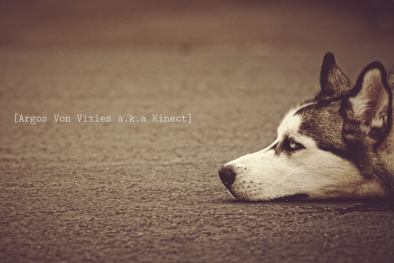 Love Dogs Quotes Wallpaper : Huskies Puppies Quotes. QuotesGram