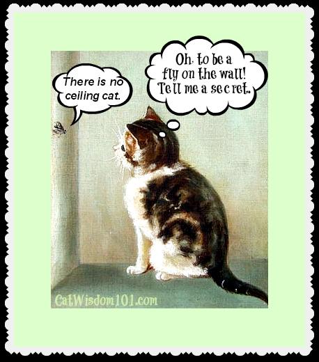 Senior Cat Quotes: Cat Death Quotes. QuotesGram