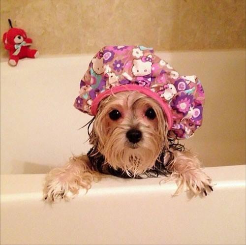 Bath Funny Dog Quotes Quotesgram