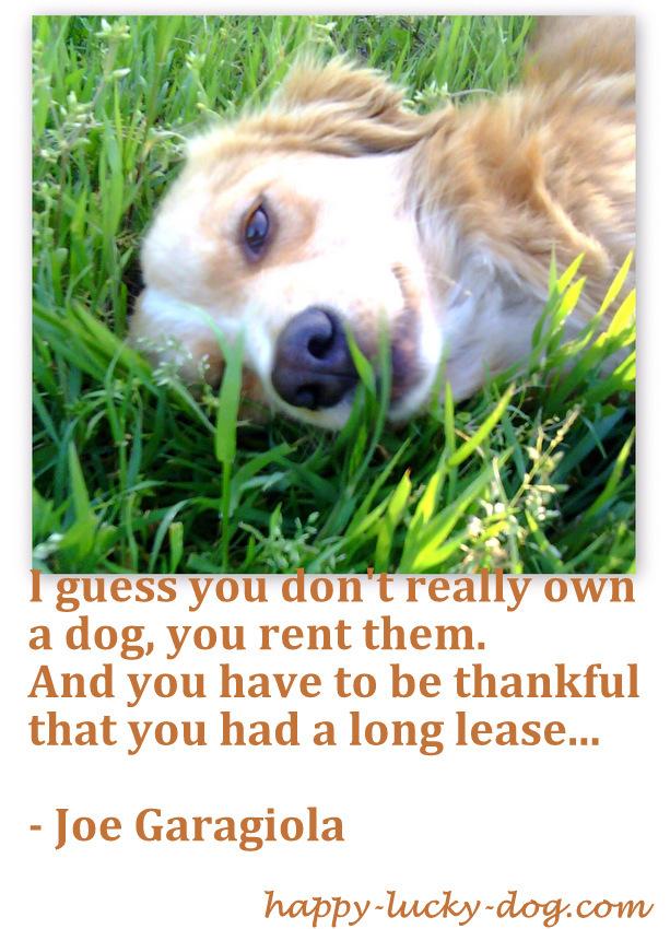 Dog Gravestone Quotes Quotesgram
