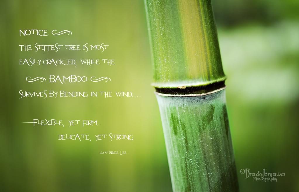 Bamboo Quotes Quotesgram
