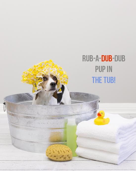 dog bath quotes quotesgram