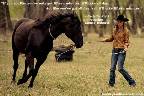 Horse Training Videos: Teaching A Horse To Come When ... |Horse Training