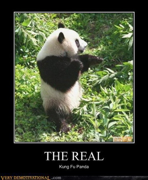 flirting panda meme From photobombing squirrel to annoying girlfriend, discover the 25 funniest internet memes of all time.
