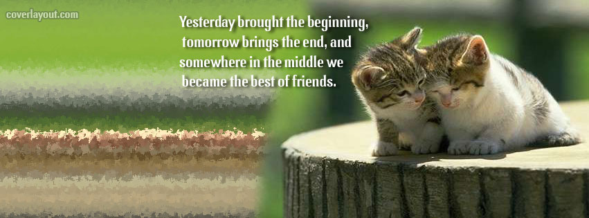 Quotes About Cats And Friendship Friendship Quot...