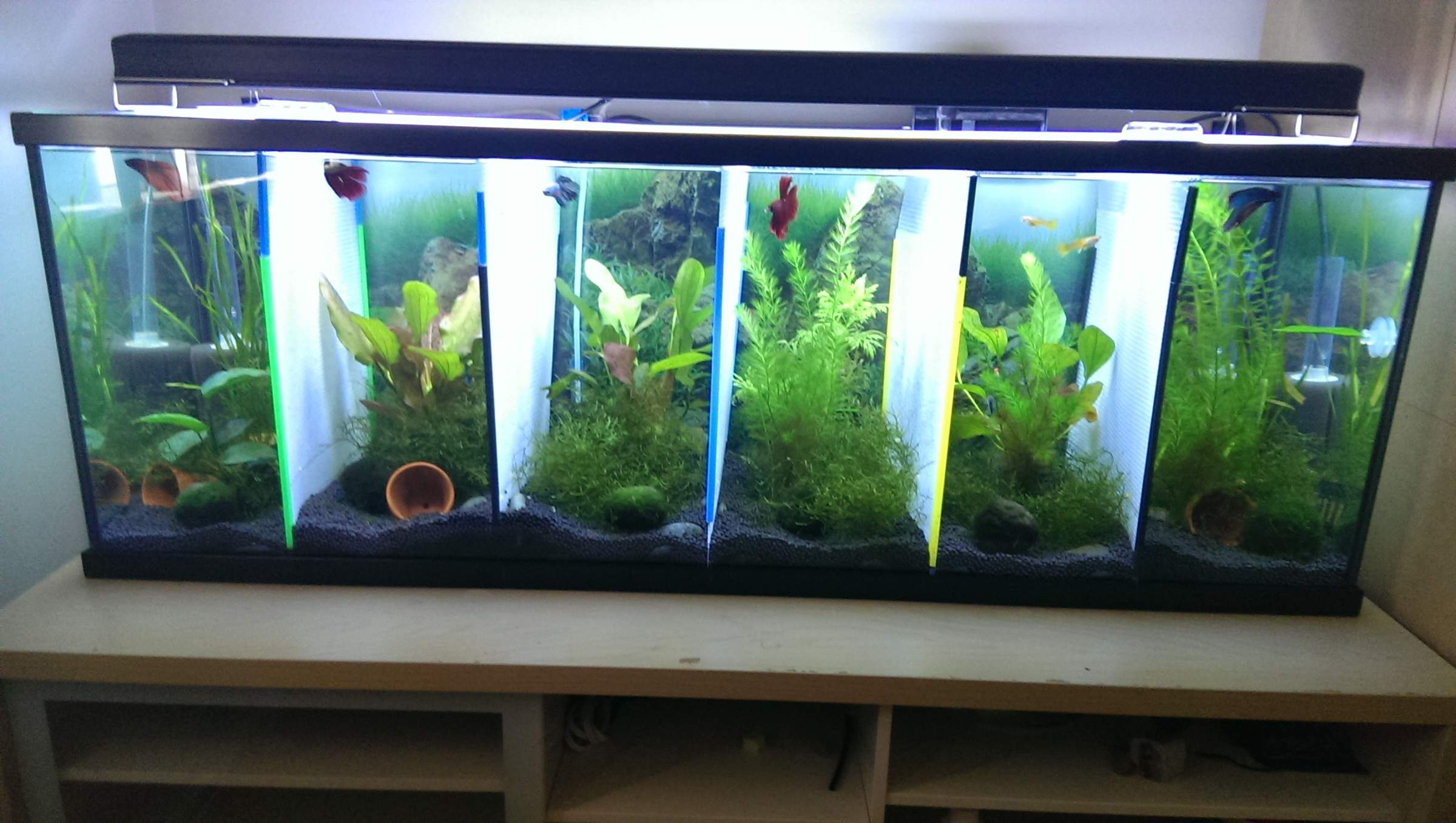 Quotes about fish tanks quotesgram for Betta fish tanks for sale