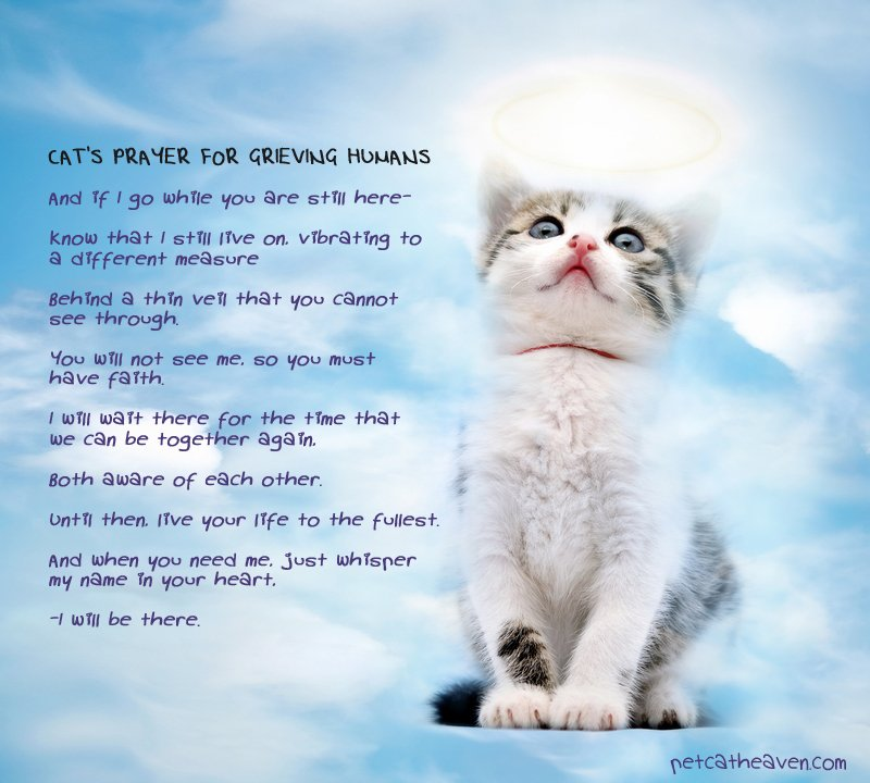 Cat Loss Quotes And Poetry Quotesgram