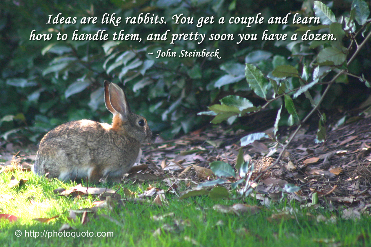 Quotes About Rabbits: Famous Rabbit Quotes. QuotesGram